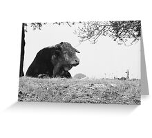 ferdinand the bull Greeting Card
