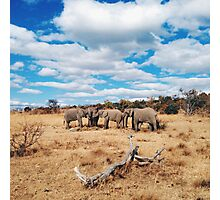 Elephants - Group Meeting Photographic Print