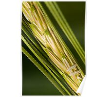 Grains of Wheat Poster