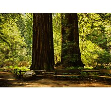 Impressions of Muir Woods, California Photographic Print