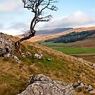 Kingsdale (Christmas day 2014) by Stephen Knowles