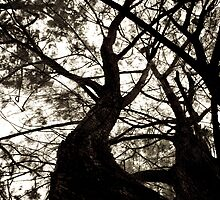 Trees by Chaminda Subasinghe