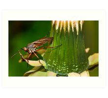 Dandelion fly Art Print