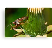 Dandelion fly Canvas Print