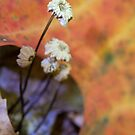 autumn bouquet by Manon Boily