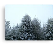 White tipped trees Canvas Print