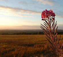 Flowering Sunset by David Smith