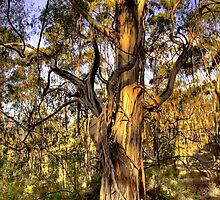 Gum Tree by Mishka Góra