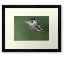Guess Who Is Going to Lay an Egg!! Framed Print