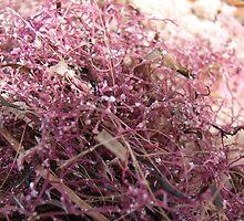 Pink Seaweed by Maryanne Lawrence