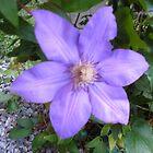 Best flower of the season by lovesmoondrop