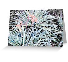 Colorful Plant Greeting Card