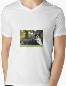 Australian Shepherd Tri Color Mens V-Neck T-Shirt