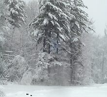 Winter Tree by Sam Pierce