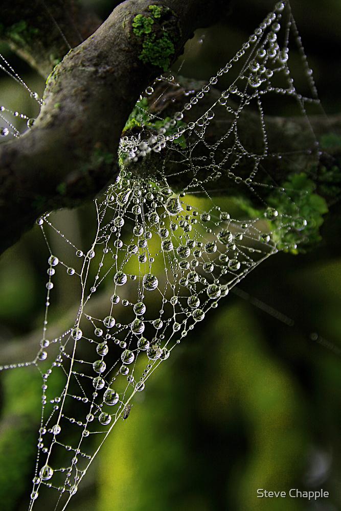 Web drops by Steve Chapple
