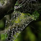 Web drops by Steve Chapple