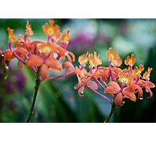 Freshly Watered Orchids Photographic Print