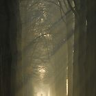 Going towards the light by jchanders
