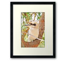 Fluffy Says Thank You for the views and shows his Left Profile - Kookaburra, Syney Australia Framed Print