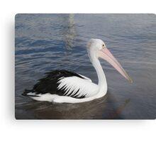 Hello Pelican - Rottnest  Island 3 Metal Print