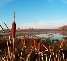 Cattail Morning by Molly  Kinsey