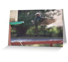 CowBird in Flight Greeting Card