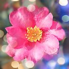 pretty pink camellia flower. digital photo  art. by naturematters