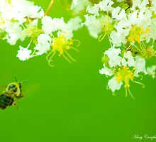 Buzzing About by Mary Campbell