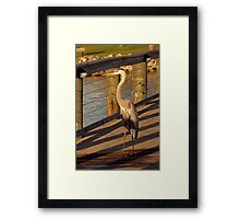 Big Bird Walks on an Indian River Pier Framed Print