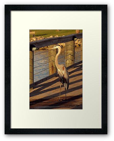 Big Bird Walks on an Indian River Pier by SummerJade