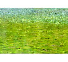 Pond Photographic Print