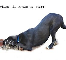 I think I smell a rat! Greeting card by Qnita