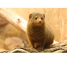 Little Rodent Photographic Print