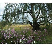 Beneath the Willow Tree Photographic Print