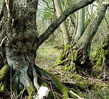 The Bog Oak Three by James Stevens