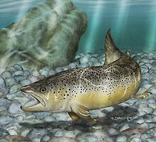 River Brown - Brown Trout by David Pearce
