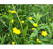 Buttercups Photographic Print