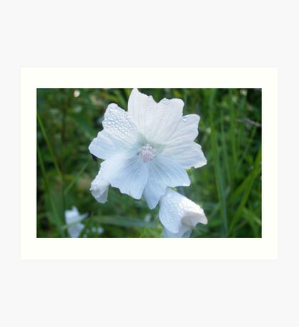 White Flower with Dew Drops Art Print