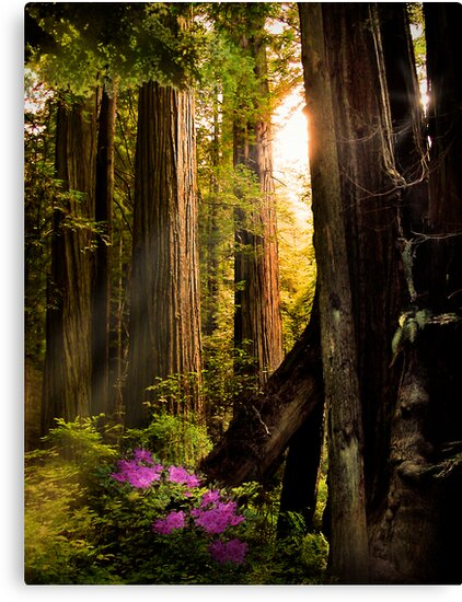 Among the Giants by BMV1