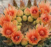 barrel cactus flowers by RichImage