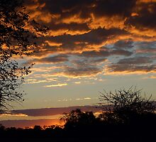 "TYPICAL ""BUSHVELD"" SUNSET by Magaret Meintjes"