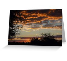 "TYPICAL ""BUSHVELD"" SUNSET Greeting Card"