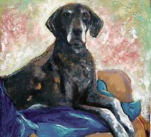 Babe German shorthair pointer by RDRiccoboni