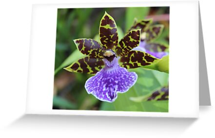 Dancing Orchid by Erica Long