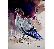 a pigeon Photographic Print
