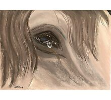 Equine Tears Photographic Print
