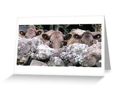 The Moo Sisters Greeting Card