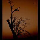Tree in Mist. by Norman Winkworth