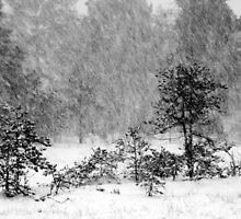 26.12.2014: Blizzard II by Petri Volanen