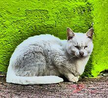 cat IV - gato by Bernhard Matejka
